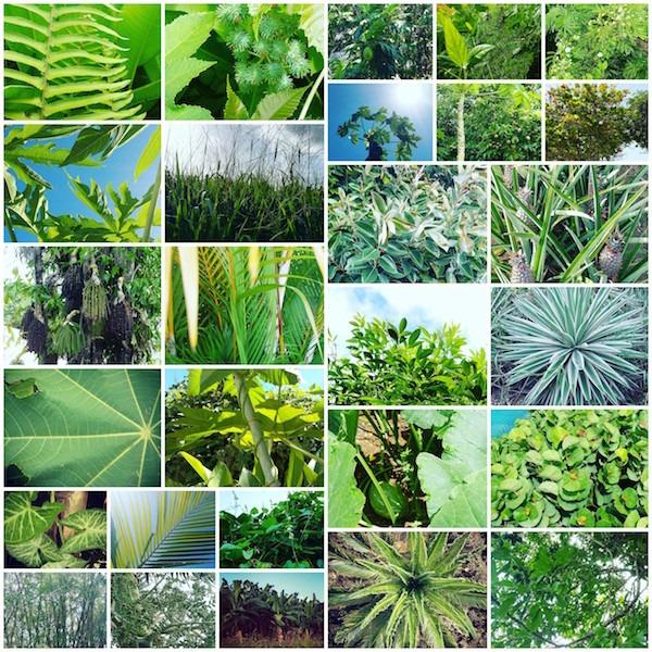 Guadeloupe - nature - verts
