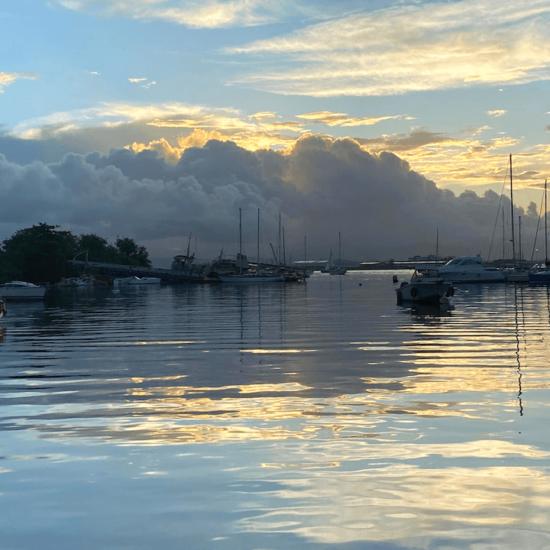 Sur le terrain en Guadeloupe : 3 posts très appréciés sur Twitter