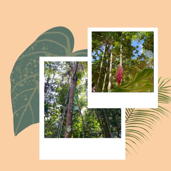 Nature en Guadeloupe : 3 récentes vidéos publiées sur Twitter qui ont retenu votre attention